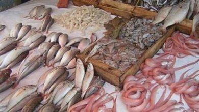 Photo of تعرف علي اسعار الأسماك اليوم السبت
