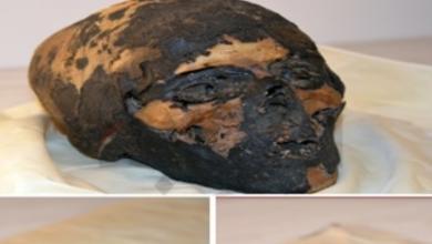 Photo of مصر تسترد 3 قطع أثرية من أمريكا