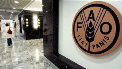 Photo of فاو: أسعار الغذاء العالمية تصل لأدنى مستوى في 17 شهرا في مايو