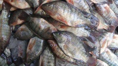 Photo of أسعار الأسماك بسوق العبور