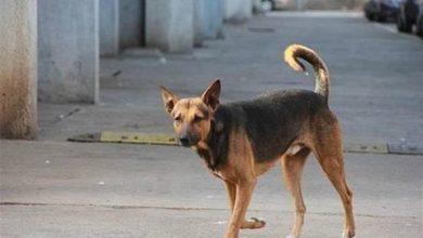Photo of كلب «مسعور» يعقر 23 شخصاُ بالغربية