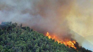 Photo of حرائق الغابات تضرب وسط البرتغال وحشد ألف من رجال الإطفاء