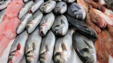 Photo of ننشر أسعار الأسماك اليوم