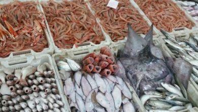 Photo of أسعار السمك اليوم الأربعاء… البلطي بـ25 جنيه