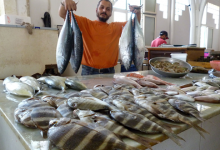 Photo of تعرف علي أسعار الأسماك بسوق العبور اليوم