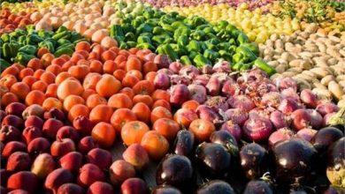 Photo of فيديو.. ٦ ملايين طن صادرات مصر الزراعية حتى نهاية العام