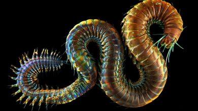 """Photo of شاهد صور.. إبداع الخالق ..""""كائنات غريبة تحت الماء"""" تعيش في حرارة دون الصفر"""