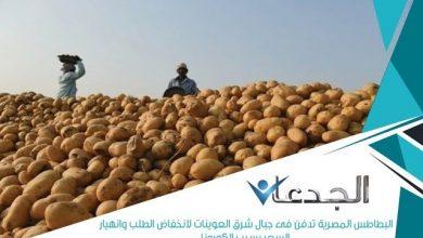 Photo of فيديو.. إعلامي يكشف كارثة دفن البطاطس في شرق العوينات بعد انهيار سعرها