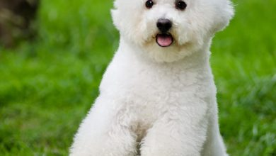Photo of حنان دعبس: لا يجوز شراء أو بيع الكلاب