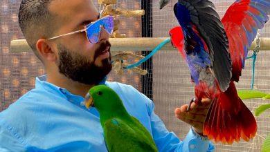 Photo of الكاتب أحمد حمدى أبو الفتوح يشارك بكتاب«حياة البغبغانات»بالقاهرة للكتاب