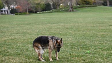 """Photo of الرئيس الأمريكي ينعى"""" كلبه الشيبرد الألماني"""